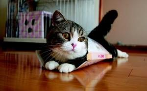 7756093636_maru-un-chat-du-star-du-net-pourrait-bien-faire-partie-de-vos-cadeaux-de-noel