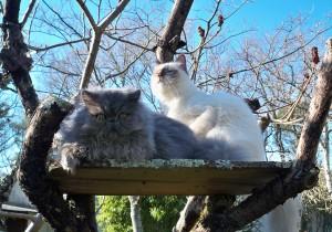 2 chats dans la nature