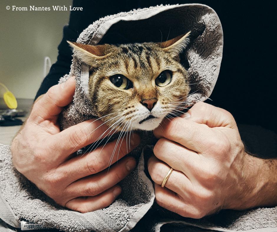 """Emballer un chat dans une serviette pour le manipuler (technique du """"chat-sushi"""")"""