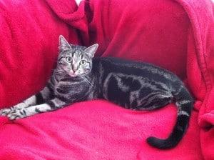 Chat couché sur un canapé