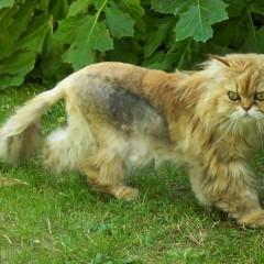 Mon chat maigrit