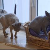Mon chat accueille un nouveau chat sur son territoire
