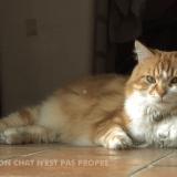 Mon chat n'est pas propre