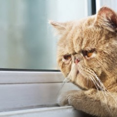 Comment savoir si mon chat a mal?