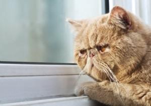 cat-pain