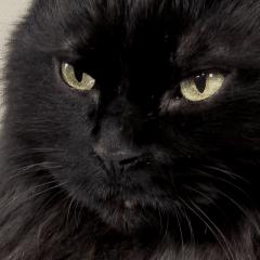 Mon chat a du diabète (2)