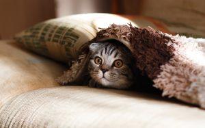 Que faire si votre chat est malade ?