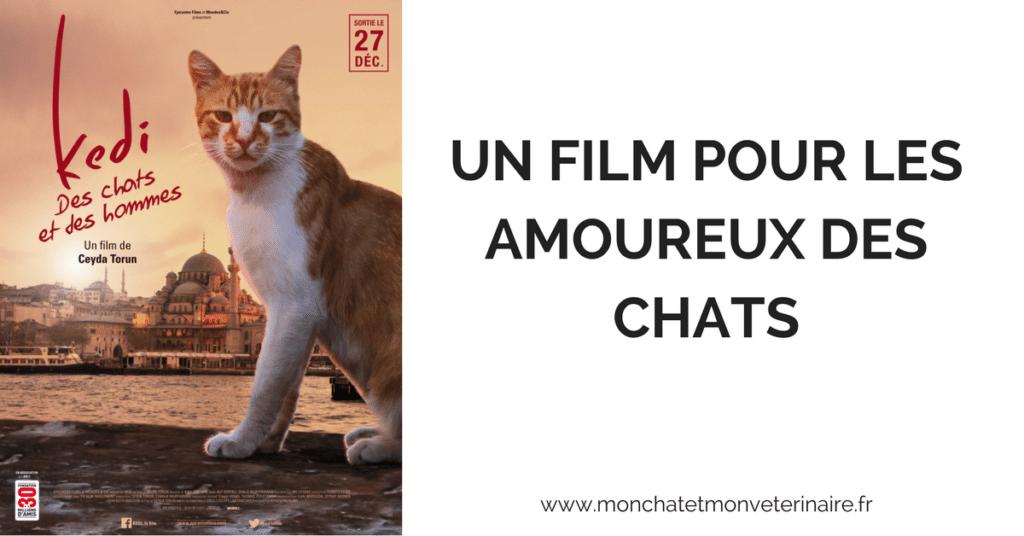 Kedi, un film pour les amoureux des chats
