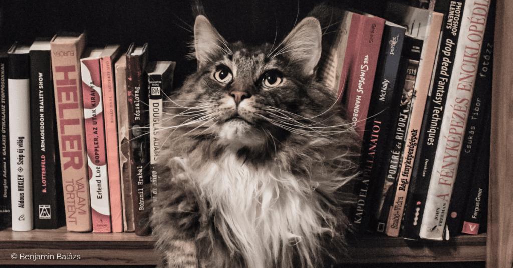 Un chat au milieu d'une bibliothèque de livres