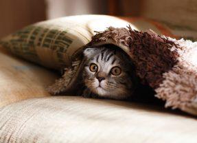 5 réflexes à adopter si votre chat est malade