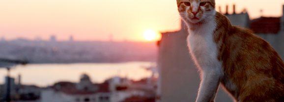 «Kedi, des chats et des hommes» : un film pour les amoureux des chats