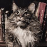 « Chat alors ! » : découvrez le quotidien extraordinaire de votre chat dans mon premier livre
